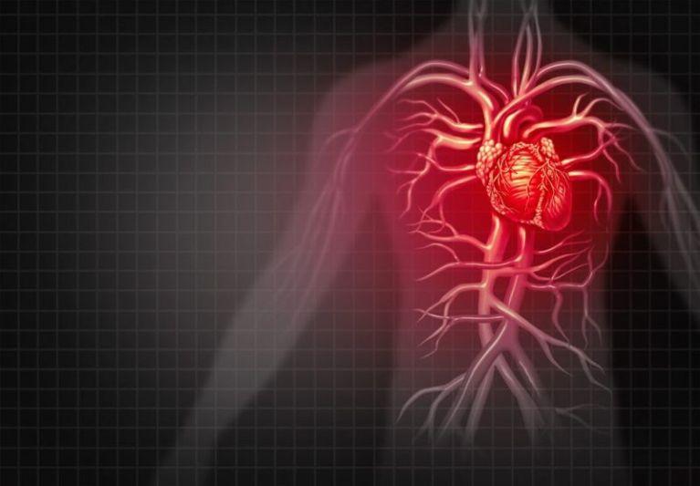 Лектины и болезни сердца
