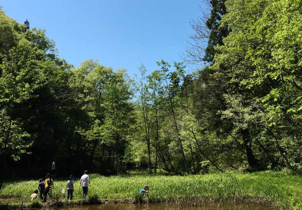 Hunting tadpoles