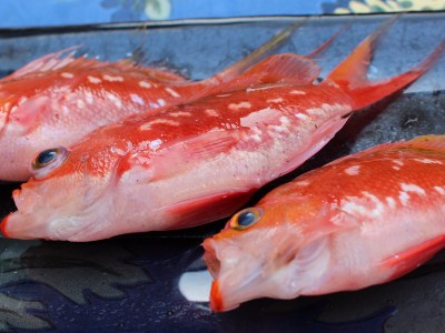 Small red fish