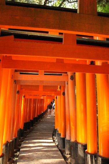 Torii at Fushimi Inari in Kyoto