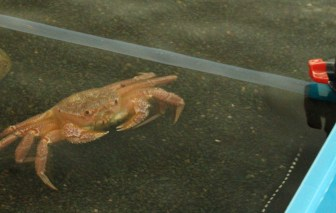 Crab in the Touching Pool