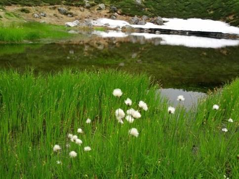 Asahidake Hot Spring