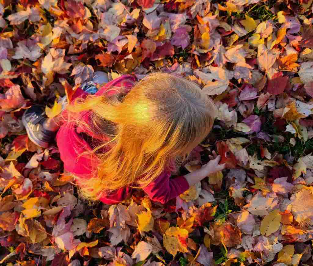 Collecting Fall Leaves