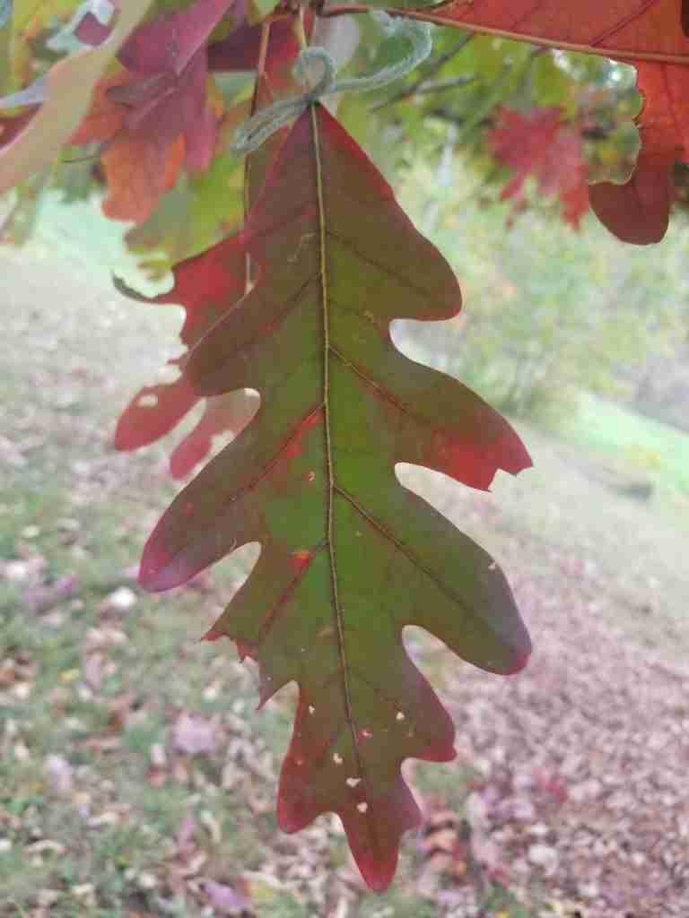 Leaf-Observation-Experiment-1