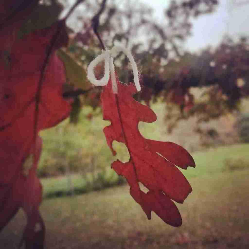 Observing-Leaves-1