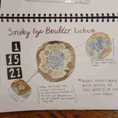 Smoky-eye-boulder-lichen-journal-page