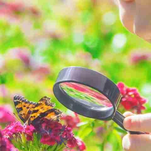 Nature Study Butterflies