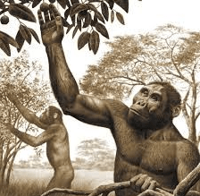 ilustración de antepasados hominidos recolectando frutos silvestres