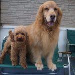 愛犬達の可愛いのぞき見