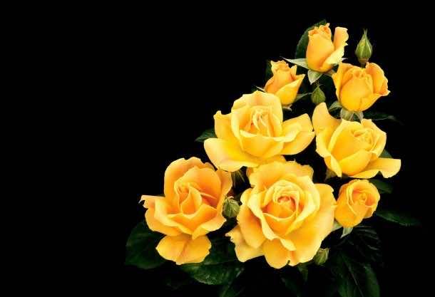 flower wallpaper 23