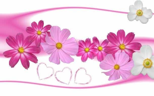 flower wallpaper 29