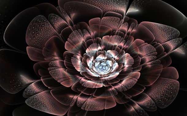 flower wallpaper 38