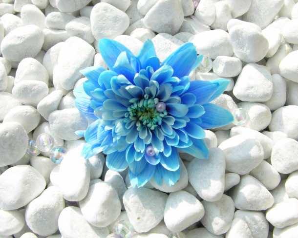 flower wallpaper 47