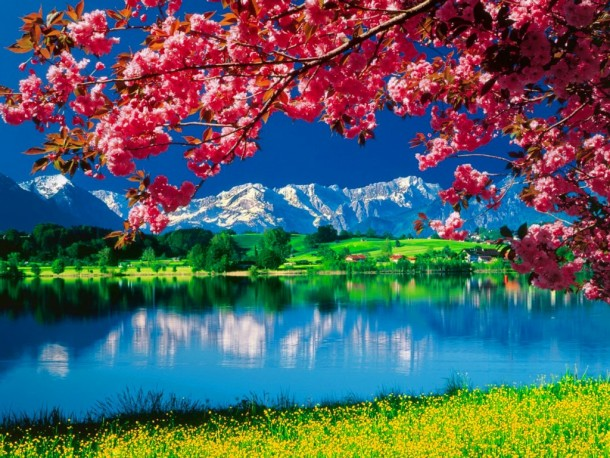 nature wallpapers 45