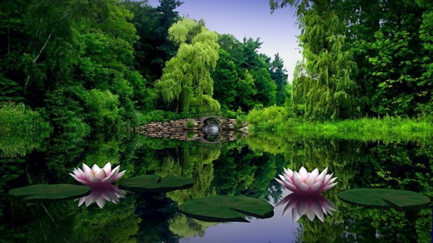 nature wallpapers 46