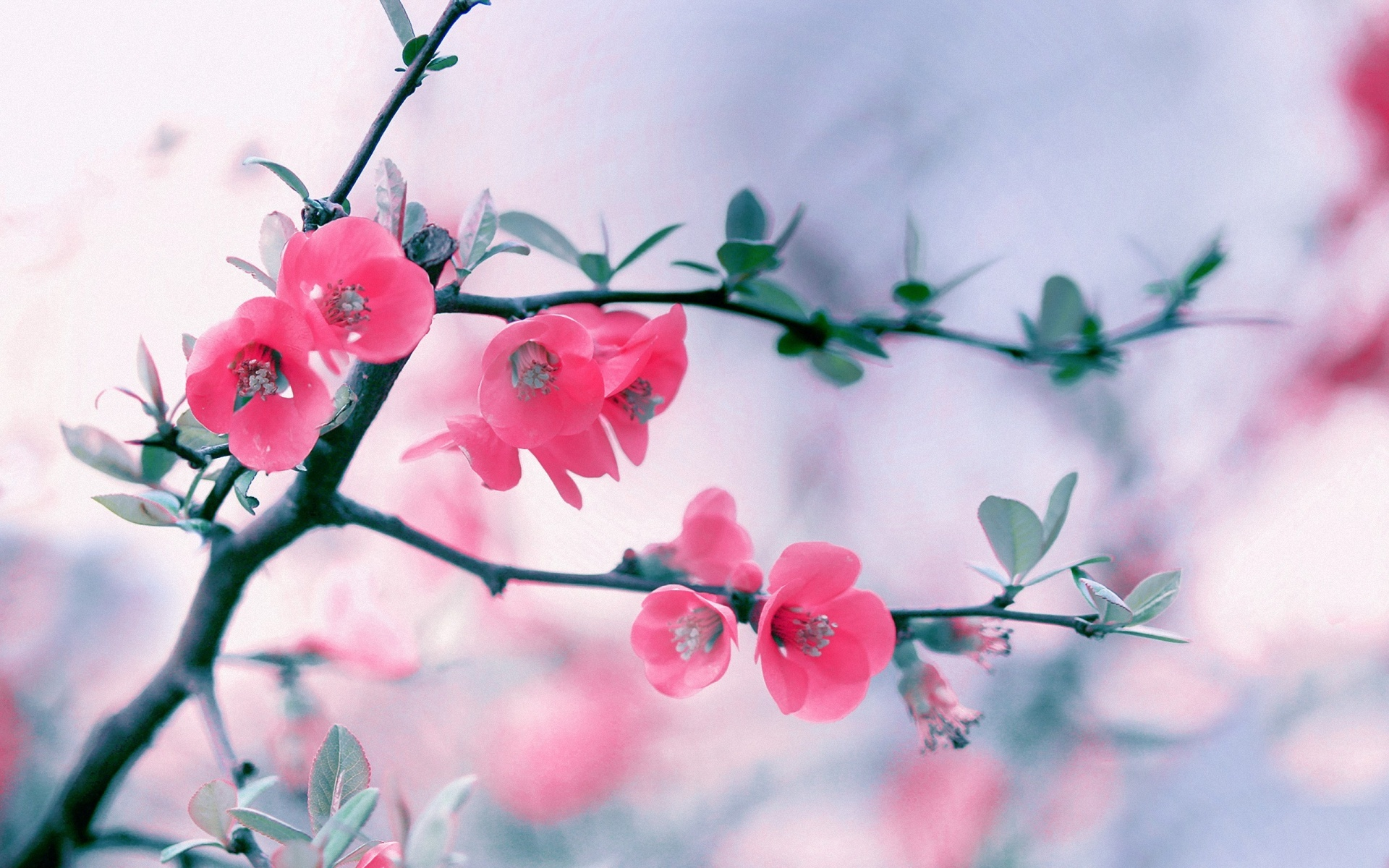 85 Wallpaper Flower Backgrounds For Mobile And Desktop
