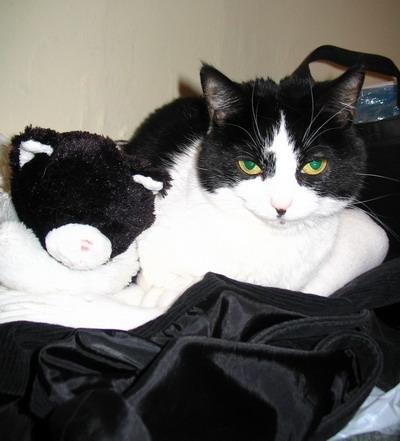 sulky-cat