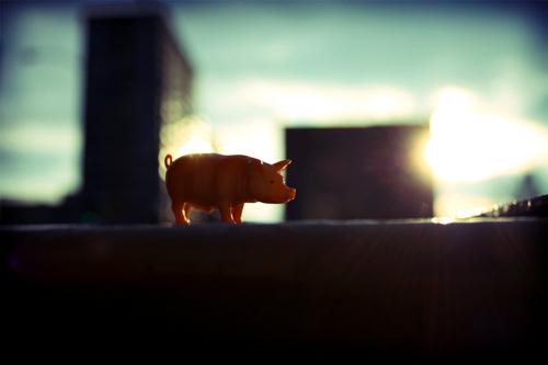 piggy city