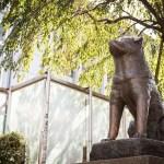 海外「可愛すぎる!」渋谷のハチ公像の足元で寝る猫が話題に…海外の反応