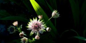 Artistically lit flower in garden