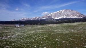 La prairie autour d'une bergerie