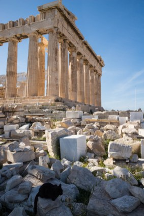 A black cat sits on the toppled ruins of athens' Acropolis. The Parthenon is seen behind the cat.
