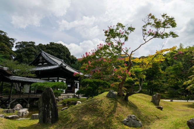 A pink flowering trees stands out on a grass hill surrounded by stones in a Japanese zen garden. A Traditional Japanese temple is seen in the background under a dramatic sky.
