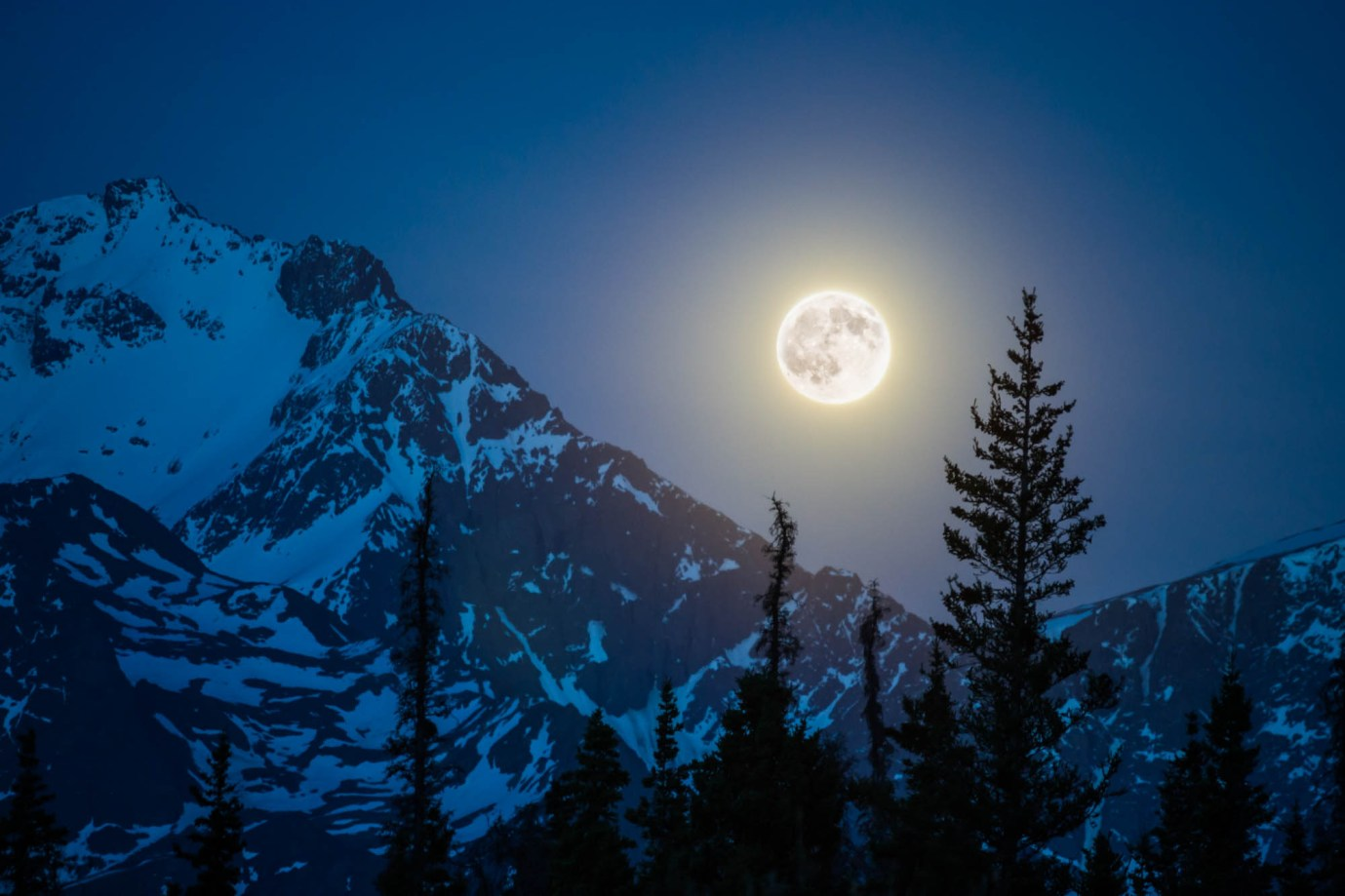 Full moon rises over the chugach mountains near Eagle River, Alaska. The sky is dark blue and there is snow on the mountain tops. Pine trees tops fill the foreground.