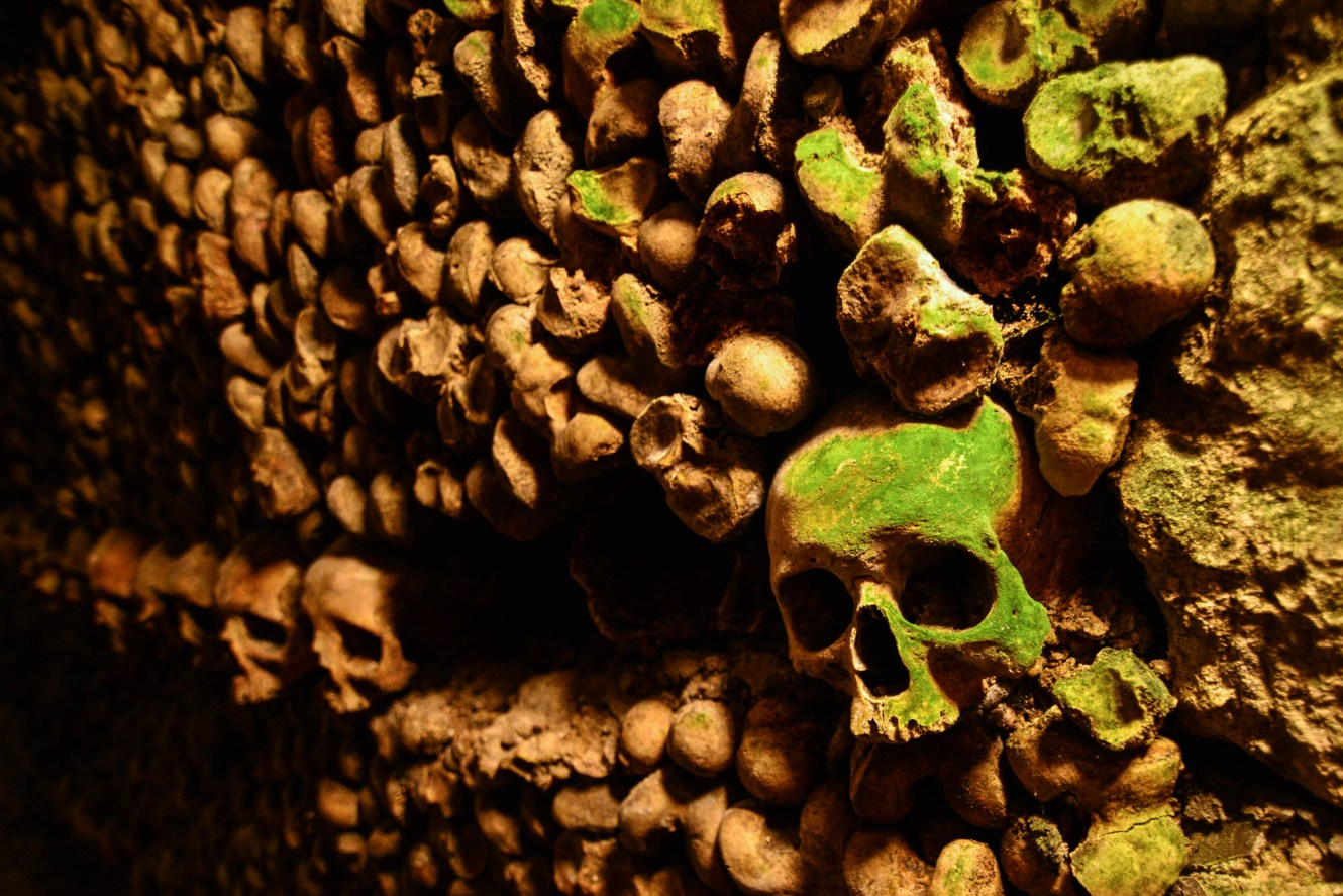 A large stack of human bones are seen lining the walls of the underground catacombs of paris. A row of skulls is seen with the first skull covered in growing moss and the remaining skulls burred out of focus.