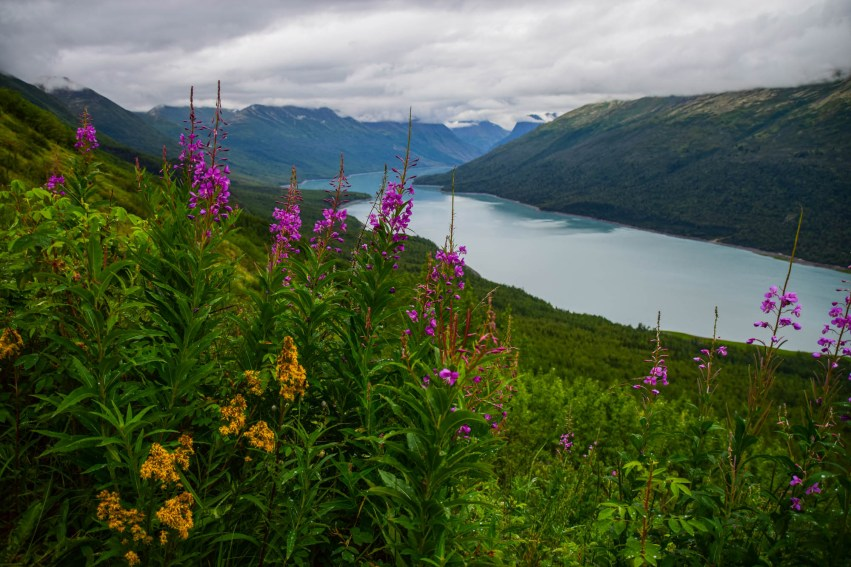 Purple and yellow wildflowers are seen above Eklutna Lake, the natural water source for Anchorage Alaska's drinking water.