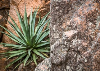 Agave & Rock