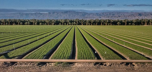 Irrigation Agriculture
