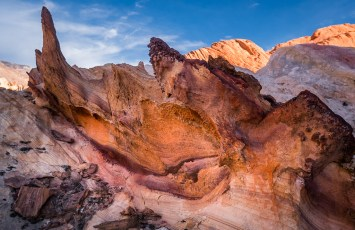 Fossilized - Gold Butte