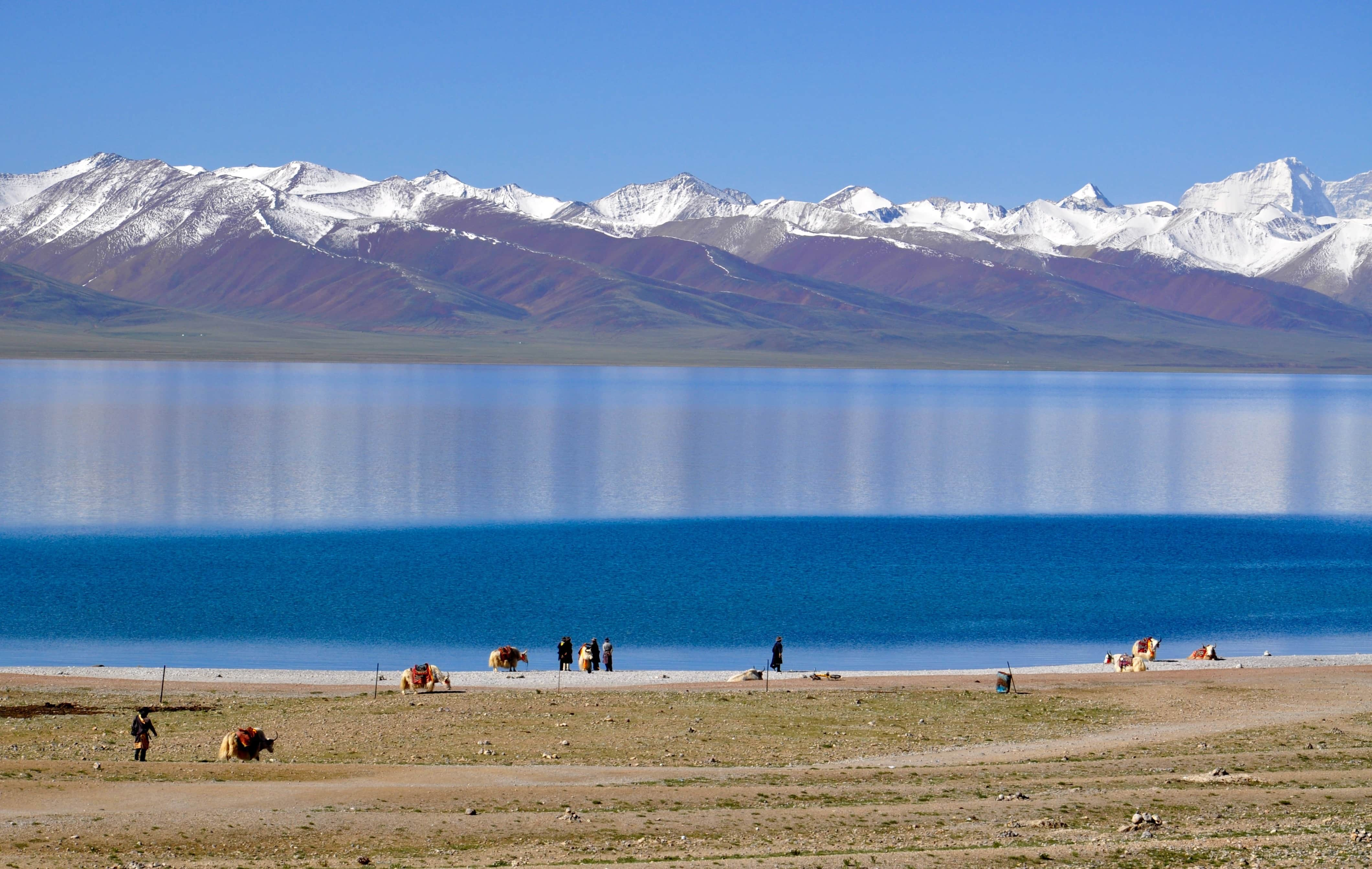 Yaks by the Namtso lake in Tibet