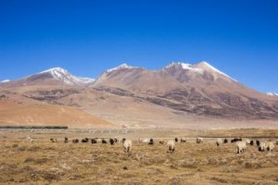 Train on Qinghai Tibet Railway views in the Plateau