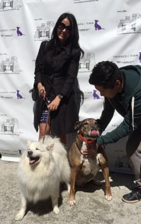 Miki & HSNY Dogs