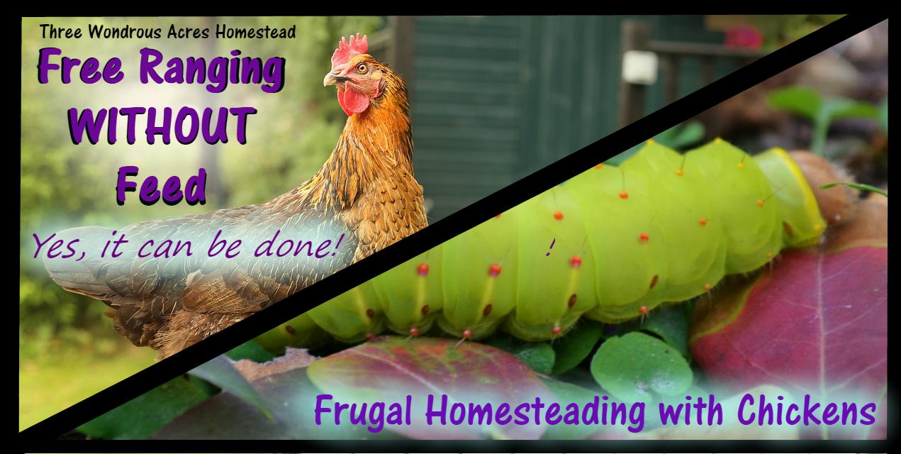 Raising Free Range Chickens WITHOUT Feed – 3 Wondrous Acres