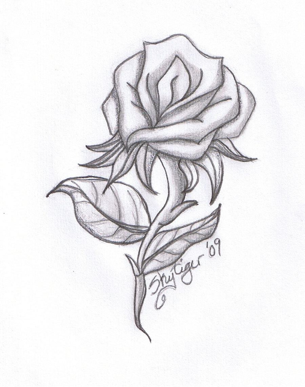 Rose Drawing 8 8608 The Wondrous Pics