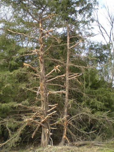 treesyuck04