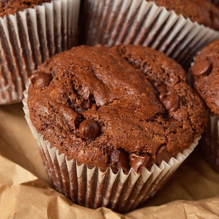 large chocolate muffin with chocolate chips peaking out