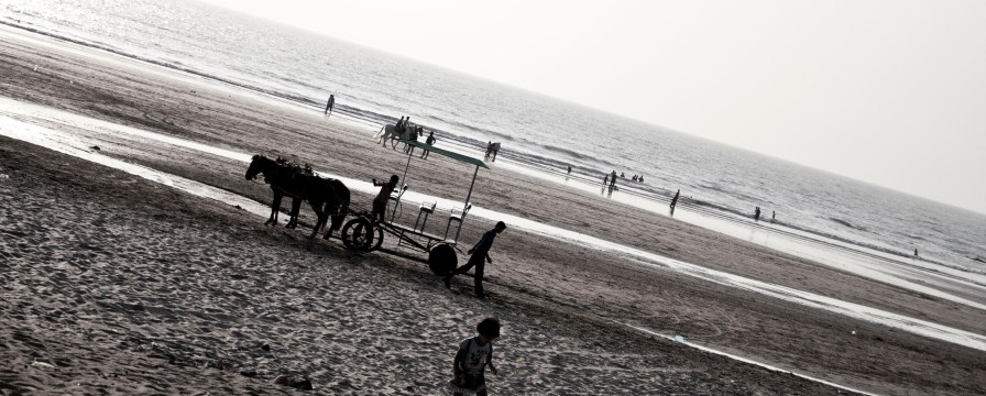 wildlife on beach ;)