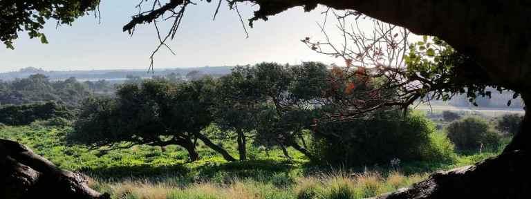 רשימת העצים בארץ ישראל