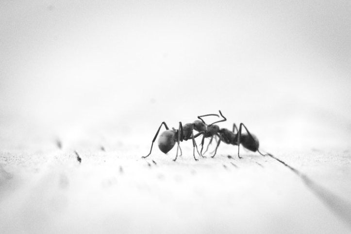 pest control – 3 things you might be trying that won_t work
