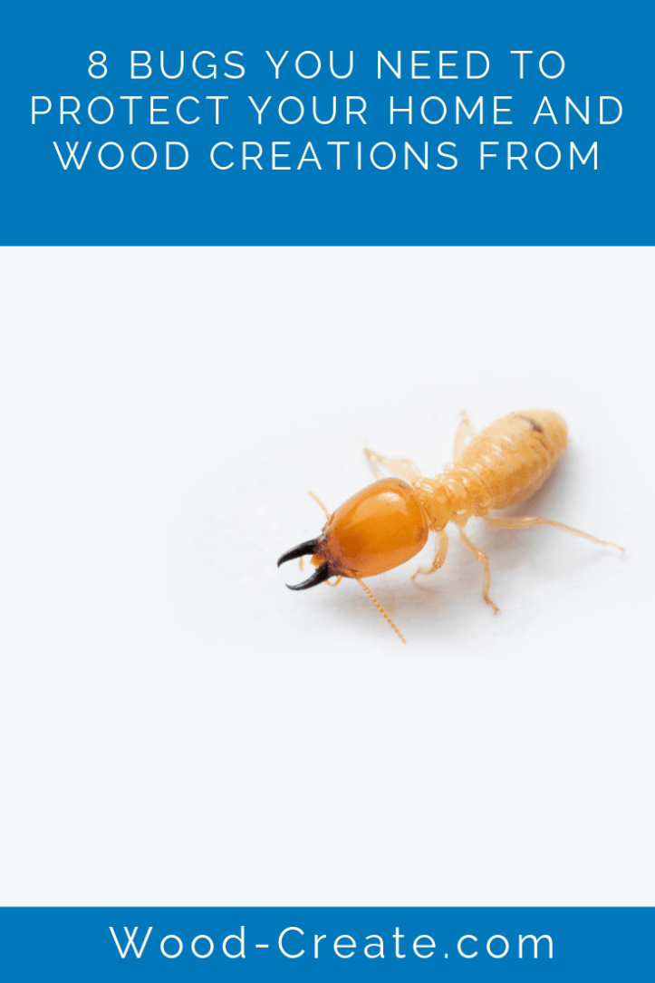 8 bugs you need to protect your home and wood creations from (1).png