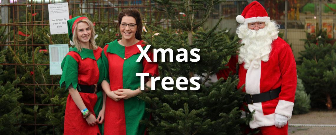 Santa has picked his tree, have you?
