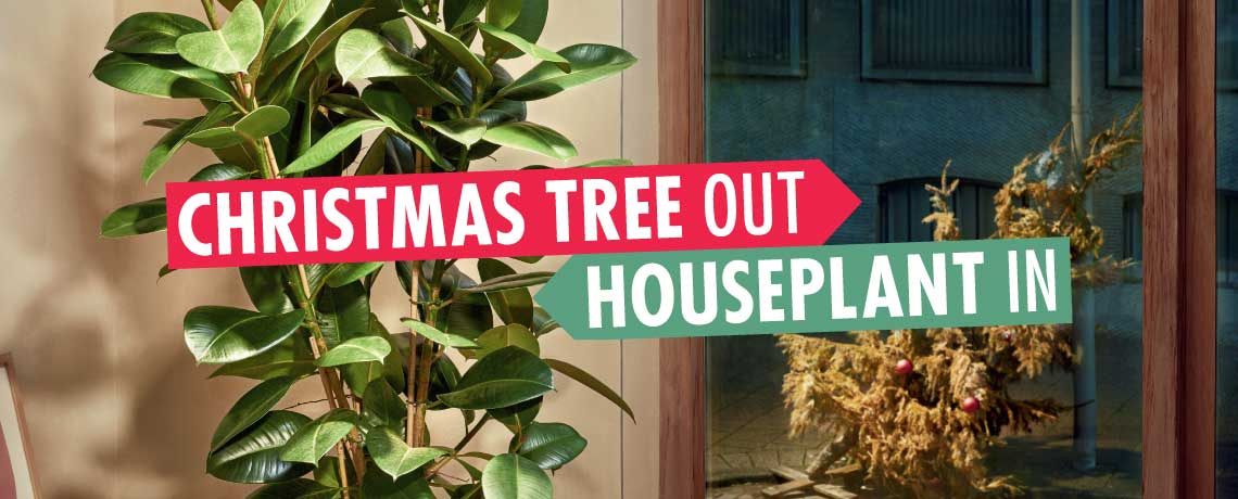 Christmas trees out houseplants in