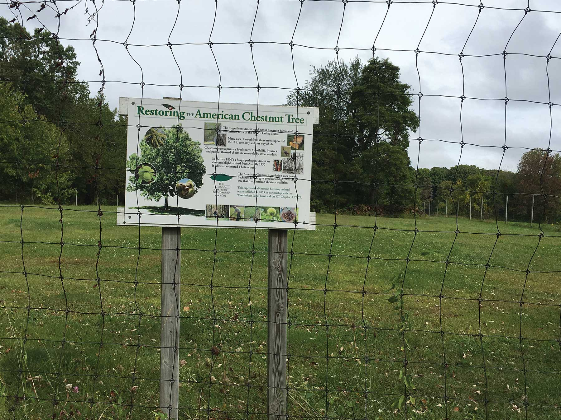 Group Works to Bring A Dog Park to Center of Town