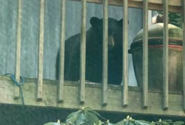 From The Woodbridge Police Department: Bear Sightings