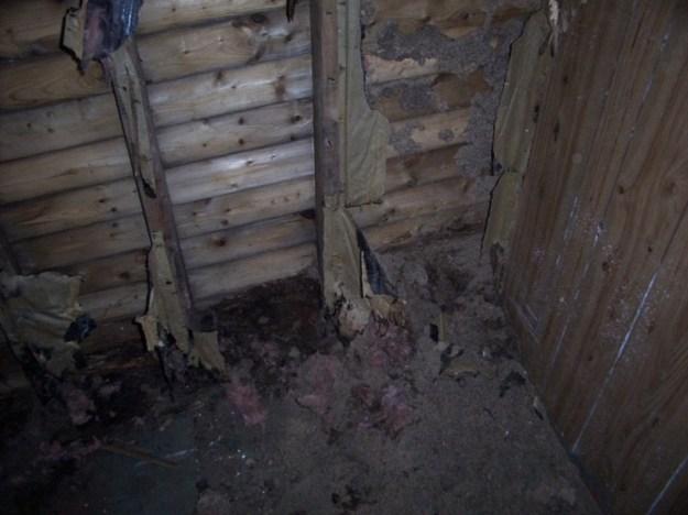 Rotting shed walls.