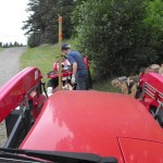 Splitting some maple firewood.